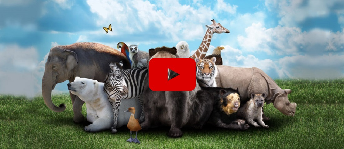 10 Fascinating Facts You Didn't Know About Animals [Video]